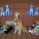 Andie - Golden Retriever - Sue Sorensen