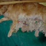 Moya's Puppies Born 3