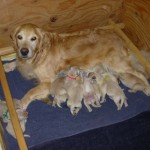 Moya's Puppies Born 4